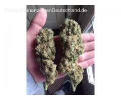 Top shelf medical buds available
