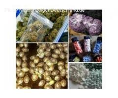 GRADE A + QUALITY MARIJUANA AVAILABLE FOR BOTH STONERS AND PATIENTS
